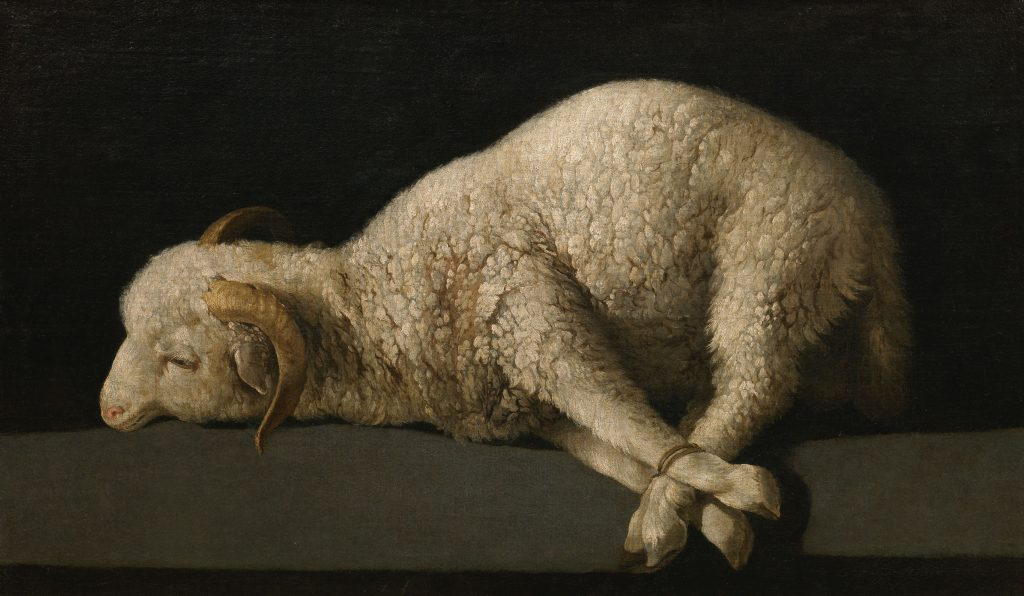 Francisco de Zurbaràn: «Lamm Gottes»; Agnus Dei, 1635–1640, Museo del Prado